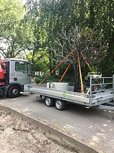 Transport van fundament en gedenkboom op begraafplaats Ridderkerk